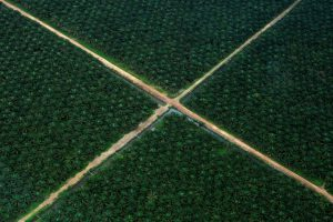 An aerial view of a palm oil plantation in Indonesia's South Sumatra province. October 2016 Photo supplied by: REUTERS